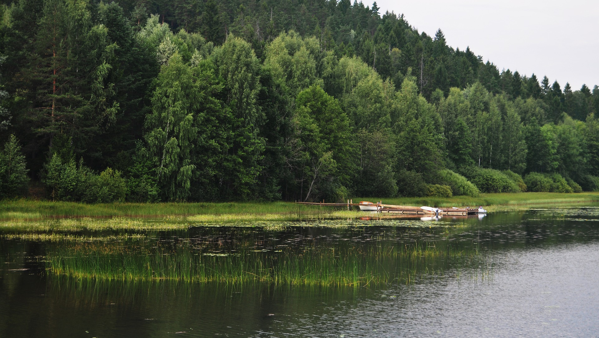 landscape of a lake and trees
